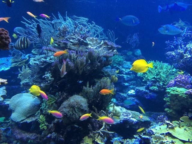 Le migliori fotocamere digitali subacquee